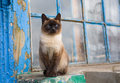 Graceful siamese cat with blue eyes sitting at the old window Stock Photography