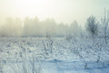 Gradient colorize snowy landscape with snow fog Royalty Free Stock Photo