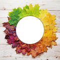 Gradient of multicolored fall maple leaves. Autumn round frame