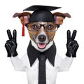 Graduate dog with peace fingers and happy Stock Images