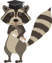 Graduation raccoon cute cartoon with hat and diploma eps Royalty Free Stock Image