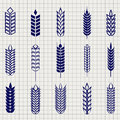 Grain ears collection on notebook page