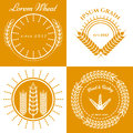 Grain ears concept logo design collection