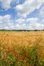 Grain field in Bavaria, Germany Royalty Free Stock Photography