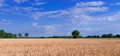 Grain field Royalty Free Stock Photo
