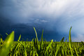 Grain Field And Sky
