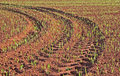 Grain Field Tire Tracks Stock Images