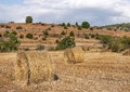Grain fields with trees located in the spanish province of teruel in one side you see the cereal collected on a cloudy day Royalty Free Stock Photo