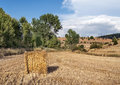 Grain fields with trees in one side located in the spanish province of teruel in one side you see the cereal collected on a sunny Royalty Free Stock Photos