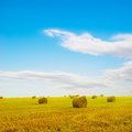 After the grain harvest august rolls of straw in field Royalty Free Stock Image