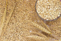 Grain oats, oat flakes in a box, twigs barley Royalty Free Stock Photo