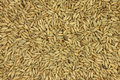 Grain rye malt  background Royalty Free Stock Photo