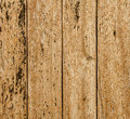 Grained rusty wood texture. Royalty Free Stock Photo