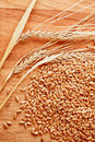 Grains and ears of wheat Royalty Free Stock Photography