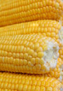 Grains of yellow ripe corn Stock Photography
