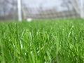 Grama verde com rede do soccer Imagens de Stock