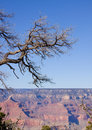 Grand Canyon Arizona tree Royalty Free Stock Photos