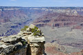 Grand canyon az barren land usa Stock Photography