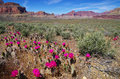 Grand Canyon Cactus Landscape Royalty Free Stock Photo
