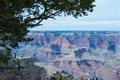 Grand canyon national park wonderful picture of the taken in february the picture is framed by an evergreen tree on the upper left Royalty Free Stock Image