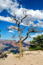 Grand Canyon and tree Royalty Free Stock Photos