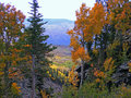 Grand mesa fall lands end during vibrant colors aspen trees and pine trees Royalty Free Stock Image