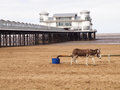 Grand pier and donkey on beach weston super mare an old brown the sandy of in somerset england uk the is in the background a Stock Photography