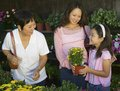 Grandmother mother and daughter shopping for plants in nursery Stock Photos