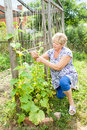 Grandmother in your garden working Royalty Free Stock Photo