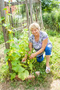 Grandmother in your garden working Stock Photography