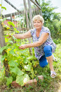 Grandmother in your garden working Stock Image