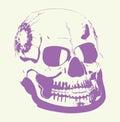 Grange skull vector picture for halloween Royalty Free Stock Image
