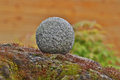 Granite ball and zen garden on moss covered stone Royalty Free Stock Images