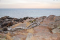 Granite Coast Line: Bunker Bay, Western Australia Royalty Free Stock Photo