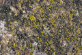 Granite mossy texture moss grown background Royalty Free Stock Images