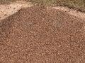 Granite pebble mound ants nest