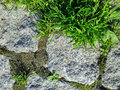 Granite rock pavement detail stone background with small portions of green grass vegetation Royalty Free Stock Image