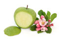 Granny smith apple green with flower blossom over white background Stock Photos