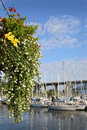 Granville island flower basket vancouver a hanging on with a marina and the burrard street bridge in the background british Stock Images