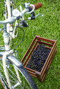 Grape in basket and bicycle on grass Royalty Free Stock Photo
