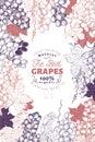 Grape berry frame template. Hand drawn vector fruit illustration. Engraved style vintage botanical background.