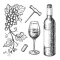 Grape branches, bottle, glass of wine. Royalty Free Stock Photo