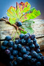 Grape bunch with leaf on wood log  Royalty Free Stock Image