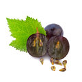 Grape in close up dark Stock Photography
