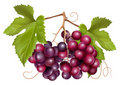 Grape cluster with green leaves Royalty Free Stock Photography