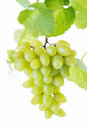 Grape cluster Royalty Free Stock Photo