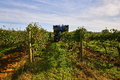 The grape harvest combine tuscany harvesting machine harvester italy Stock Images
