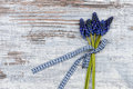 Grape hyacinth lying on wood Stock Photos