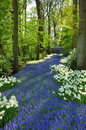 Grape Hyacinth and white daffodils Royalty Free Stock Photo