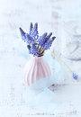 Grape Hyacinths in a Vase Stock Photography